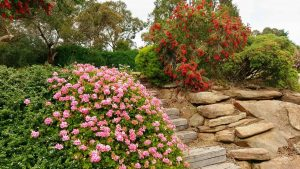 Bottle brush trees and pink flowers against rocky stairs